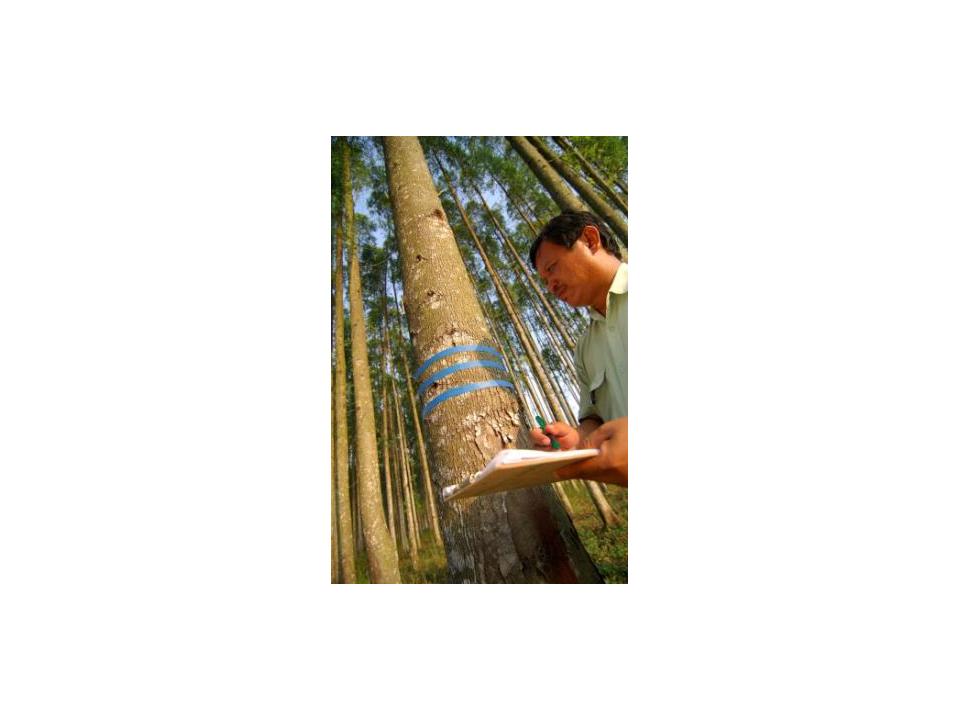 印尼森林認證系統IFCC與國際森林認證體系PEFC