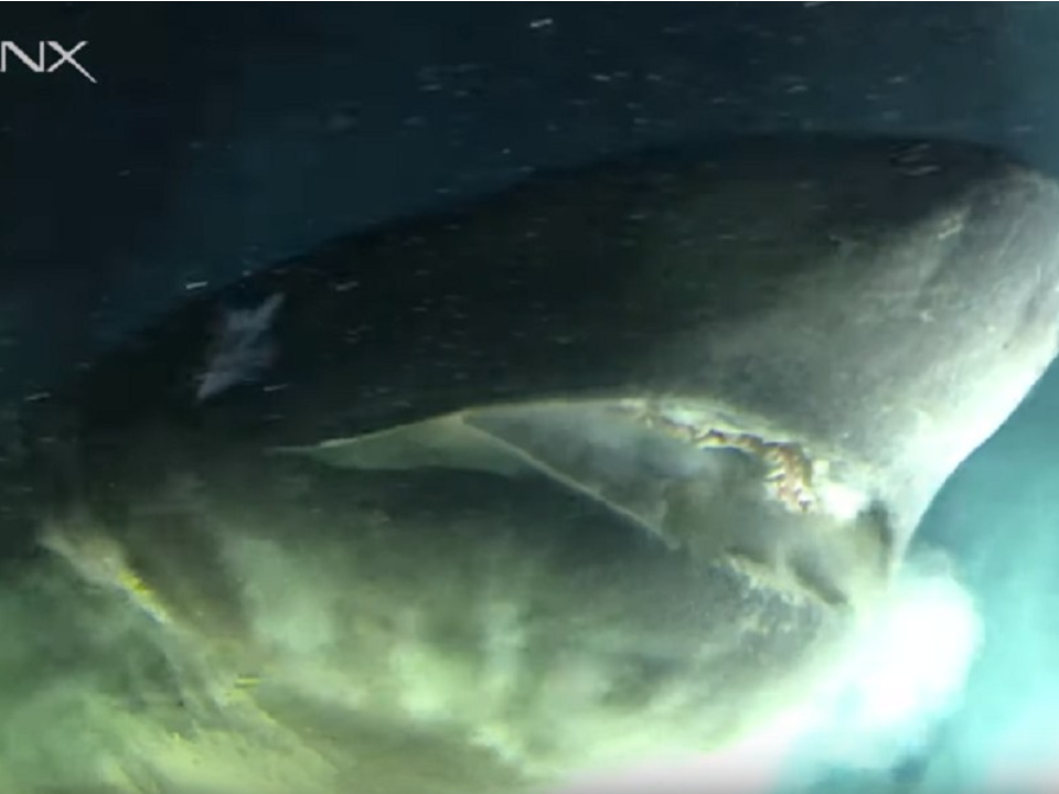 驚見1.8億年前巨鯊!研究人員嚇壞:比潛水艇還大
