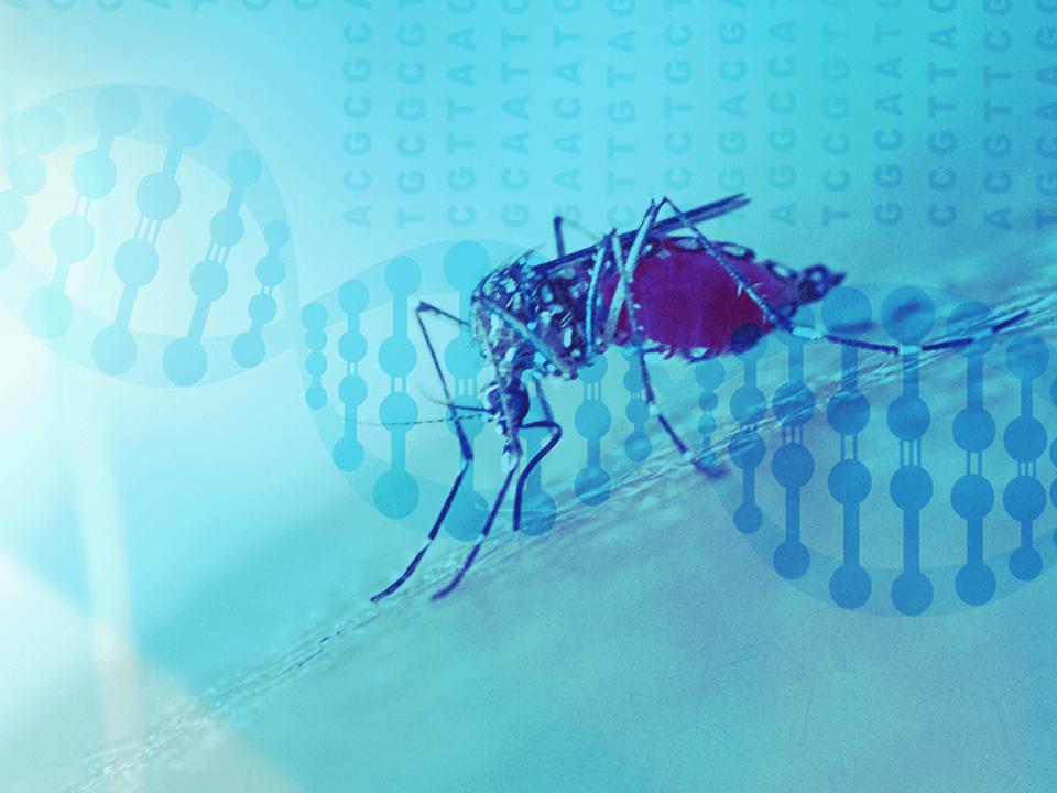 比爾蓋茲砸400萬美元 讓轉基因蚊子斷子絕孫