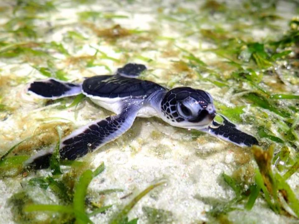 世界最美「海龜島」就在太平島 推估有上千隻海龜活動