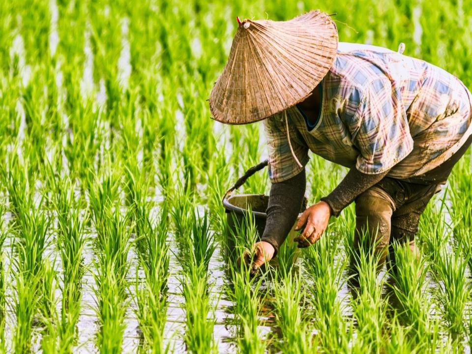 農民65歲可領退休金 繳滿30年最高可領3萬7