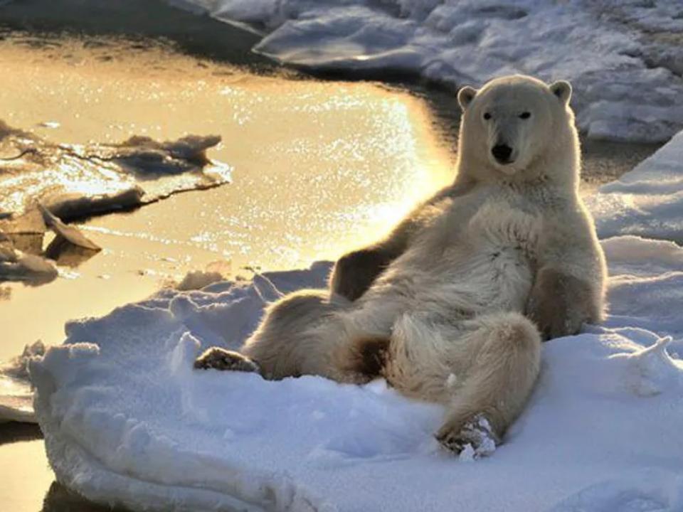 挪威北極圈測得攝氏21.7度 創歷史新高