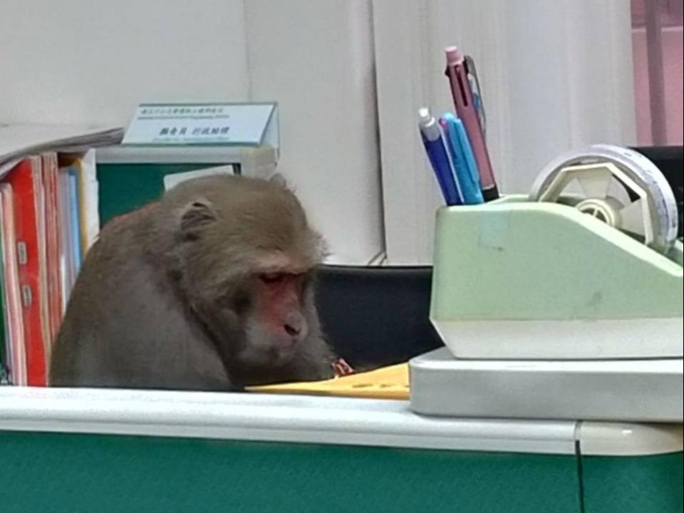 猴子在辦公?中山大學急裝「防猴窗」