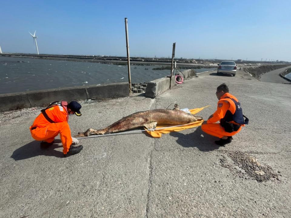 海域生態恐亮紅燈 彰化沿海四天兩鯨豚死亡